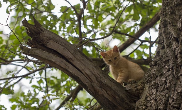 little cat stuck on a tree